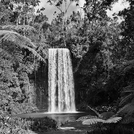 MIllaa Millaa Falls by Sarah Harding - Novices Only Landscapes ( nature, waterfall, outdoors, novices only, landscape )