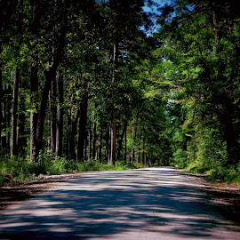 Tree lined road by Brenda Shoemake - Transportation Roads