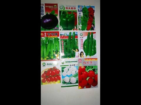 Выращивать китайские семена