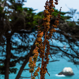 Berries by Luke Albright - Nature Up Close Other plants ( coast, nature, plant, tree, berries, water )