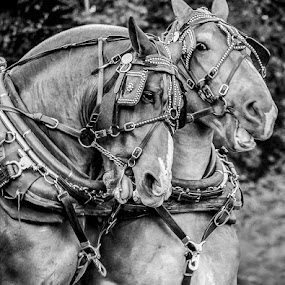 The A-Team by Christy Borders - Animals Horses
