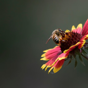 flower and bee by Alfredo Garciaferro Macchia - Nature Up Close Flowers - 2011-2013