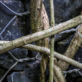 Vines & Wire by Geoffrey Wols - Nature Up Close Other plants ( fence, wire, vines, black, wall )