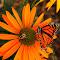 butterfly_bee.jpg