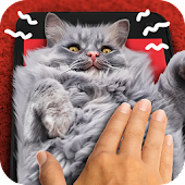 Download Rub a cat. Game APK for Android Kitkat