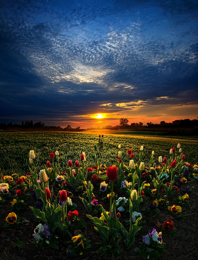 Lifetimes by Phil Koch - Landscapes Prairies, Meadows & Fields ( vertical, summer. spring, photograph, farmland, yellow, leaves, love, nature, autumn, snow, flowers, orange, twilight, agriculture, horizon, portrait, environment, winter, season, national geographic, serene, floral, inspirational, natural light, wisconsin, phil koch, spring, photography, sun, farm, ice, horizons, inspired, office, clouds, hdr, green, scenic, morning, field, spring colorful flowers, red, blue, sunset, fall, peace, meadow, earth, sunrise, landscapes,  )