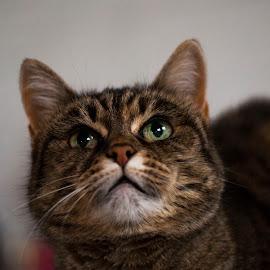 by Lottie Dalin - Animals - Cats Portraits