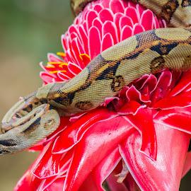 Escalofriante by Erick Castro Alvarado - Animals Reptiles ( snake, naure, culebra, reptil, flor, flower, naturaleza )
