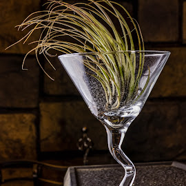 Air Plant by Chad Roberts - Artistic Objects Glass ( plant, glass, stem, fireplace, crooked glass, air plant )