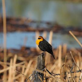 by Dennis Robertson - Animals Birds