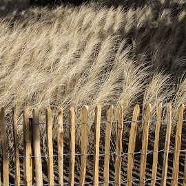 Wood & Grass by Judy White - Landscapes Prairies, Meadows & Fields ( grasses, earthtones, texture, crops, fences, gentle breeze )