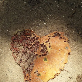 Thank you Lordfor my hearts by Jeannie Morton - Nature Up Close Leaves & Grasses