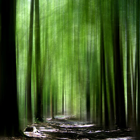 Forest by Britta Rogge - Digital Art Abstract ( photoshop art, photomanipulation, nature, green, photo manipulation, digital manipulation, digital art, forest, photography )