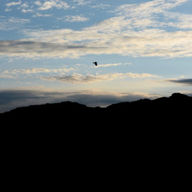 The Bird flying with the cloud by S Banerjee - Landscapes Cloud Formations