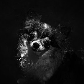 SHE'S MY BABY by Sharon Pierson - Animals - Dogs Portraits