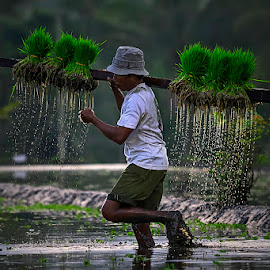 the traditional farmer by Suprapto Suprapto - People Professional People ( rice field, rice, farmer, paddy, human interest, traditional, people )