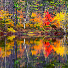 autumn colors by Stanley P. - Landscapes Forests ( forest )