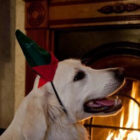 by Beth Alexander - Public Holidays Christmas