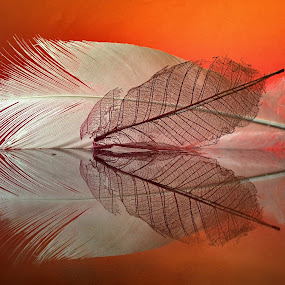 Leaf veins against white feather by Janette Ho - Artistic Objects Other Objects (  )