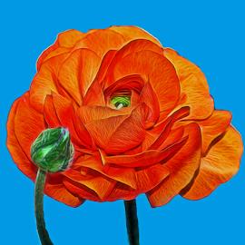 by Dipali S - Digital Art Things ( plant, creation, floral design, persian, blossom, love, single flower, digital art, flower head, pink, flower, closeup, petal, abstract, blooming, wallpaper, bloom, print, pattern, florescence, artistic, summer, ranunculus asiaticus, floral, design, buttercup )