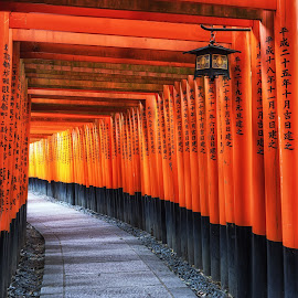 The Inari Gates by Aaron Choi - Buildings & Architecture Places of Worship ( fushimi inari, red gate, fushimi inari taisha, shinto shrine, travel, architecture, historic, asian, torii, japan, historic site, asia, fushimi, kyoto, torii gate, traditional, tourism, architectural detail, japanese, gates, gate, destination, temple, landmark, shrine, inari, serene, viewpoint, historical, taisha )