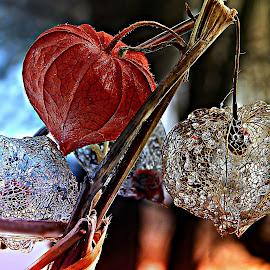 by Marija Jilek - Nature Up Close Other plants