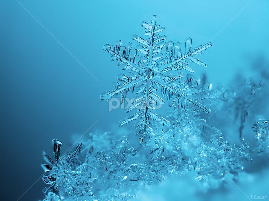 Skyblue by Tomáš Celar - Nature Up Close Water ( canon, celar, snowflake, frozen, tomas, macro, winter, cold, blue, flake, ice, snow, mp-e )