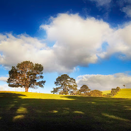 Green Hills by Greg Tennant - Landscapes Mountains & Hills ( clouds, trees, pasture )