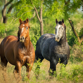 by Terry Watson - Animals Horses