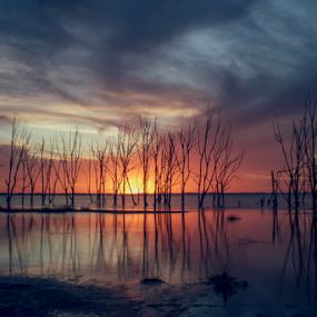 Sunset at Epecuén. Argentina by Edi Libedinsky - Landscapes Sunsets & Sunrises ( clouds, sky, flood, sunset, trees,  )