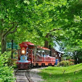 by Tammy Little Elam - Transportation Railway Tracks