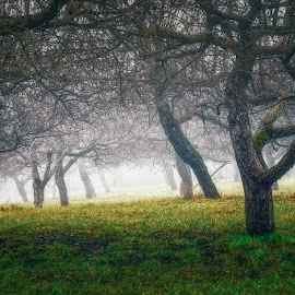 In the fog by Dragan Milovanovic - Nature Up Close Trees & Bushes