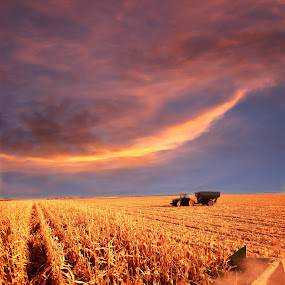 Harvesting under sunset skies by John Wollwerth - Landscapes Prairies, Meadows & Fields ( clouds, orange, machinery, agriculture, horizon, south dakota, machine, landscape, wollwerth, production, corn, crop, rows, farm, www.wollwerthimagery.com, autumn, sunset, gather, dramatic, combine, pink, harvest, square, tractor )