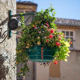 Valensole by Mauro Amoroso - Nature Up Close Gardens & Produce