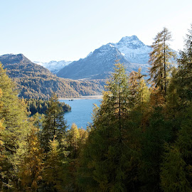Segl-Maria, Graubünden, Switzerland by Serguei Ouklonski - Landscapes Forests ( mountain, larix, wood, range, pine woodland, no person, travel, valley, landscape, nature landscape, mountains, sky, tree, nature, pinaceae, no people, idyllic, switzerland, larch, water, hill, conifer, wild, scenics, forest, tourism, lake, scenic, beauty in nature, graubunden, clear sky, fair weather, mountain range, fall, outdoors, tranquility, day, natural depression, daylight, hike, growth )