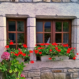 Windows  by Dobrin Anca - Buildings & Architecture Other Exteriors ( red, window, blue, brittany, flower )