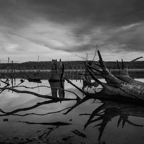 Boneyard by Christian Skilbeck - Landscapes Waterscapes ( water reflection, dead trees, black and white )