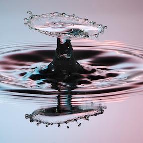 Red Blue Water Drop by Nick Vanderperre - Abstract Water Drops & Splashes ( water, 2017, macro, red, splash, blue, drop, druppel, d7000, nikon, 105 mm )