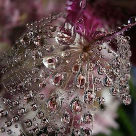 Quit Dancing by Marija Jilek - Nature Up Close Natural Waterdrops