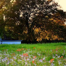 Wildflowers in field by Rhonda Kay - Landscapes Prairies, Meadows & Fields