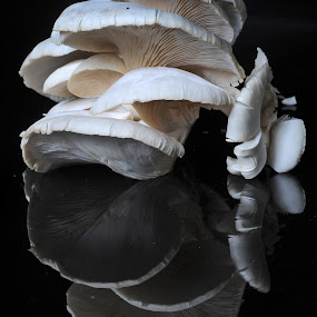 Zetas by Cristobal Garciaferro Rubio - Nature Up Close Mushrooms & Fungi ( mushroom, reflection, zetas, texture, white )