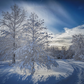 Trail in the snow by Carole Boyles - Landscapes Weather ( sky, snow scene, snow, trees, bridge )
