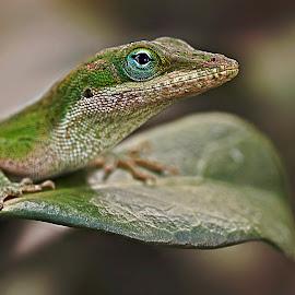 by Brook Kornegay - Animals Reptiles