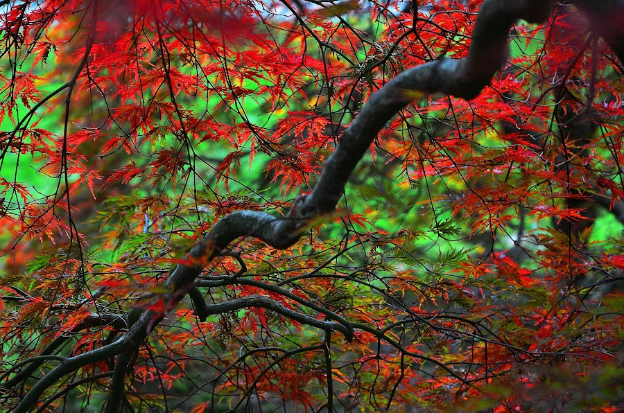 by Steve Wilking - Nature Up Close Trees & Bushes