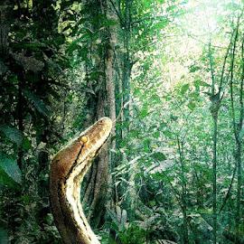 The Jungle Book by Bjørn Borge-Lunde - Digital Art Animals ( wild animal, python, snake, wilderness, nature, jungle, wildlife, reptile )