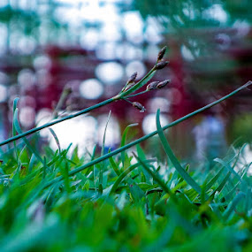 by Smurai Jack - Nature Up Close Leaves & Grasses