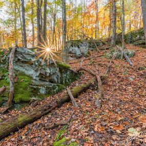 Sunburst on the trail by Jason Lemley - Landscapes Forests ( sunburst, sunset, rock, log, hiking )