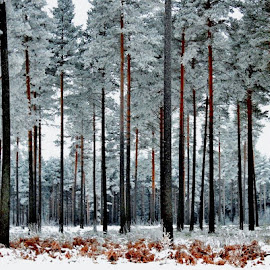 norwegian pinewood by Thor Erik Dullum - Nature Up Close Trees & Bushes