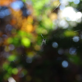 Spider on the Green by Aredhel Tasartir - Nature Up Close Webs ( nature, green leaves, green, nature close up, spider )