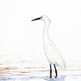 Snowy Egret Watercolor by Thomas Pound - Digital Art Animals ( wading bird, herons, water birds, egrets, birds, photoshop )